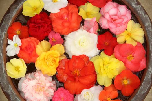 flowers nature colors  Free Photo