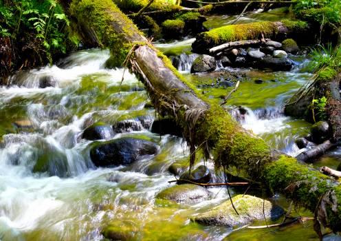 Alligator River Stream Free Photo