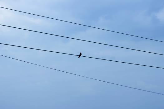 Wire Sky Electricity Free Photo