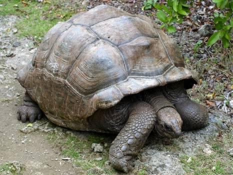 Terrapin Turtle Reptile Free Photo