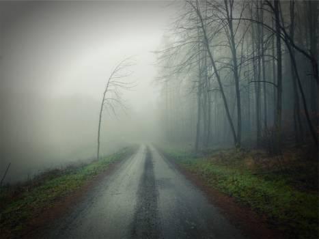 dirt road fog  #18179