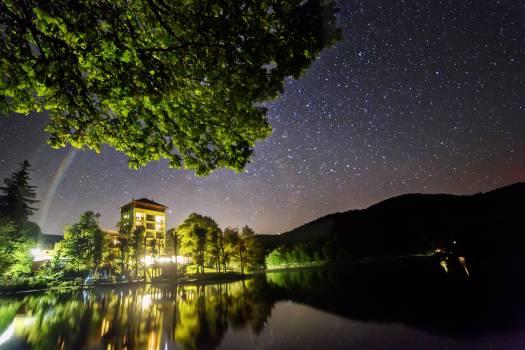 Tree Lake Water Free Photo