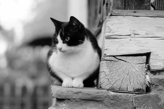 cat ledge pet  #18227