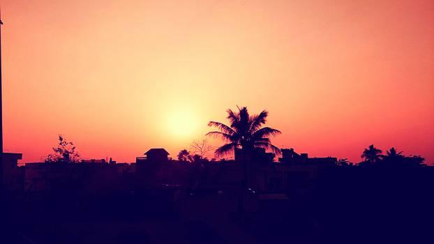 sunset dusk palm trees  #18272