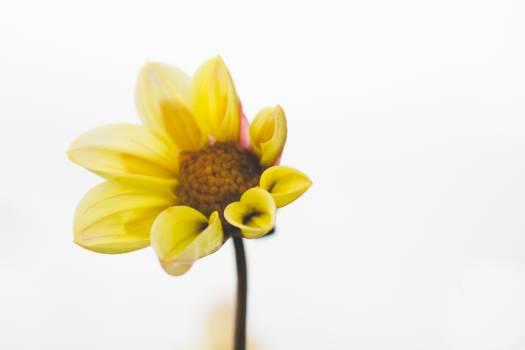 Pollen Sunflower Flower Free Photo