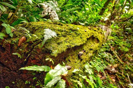 Plant Fern Leaf Free Photo