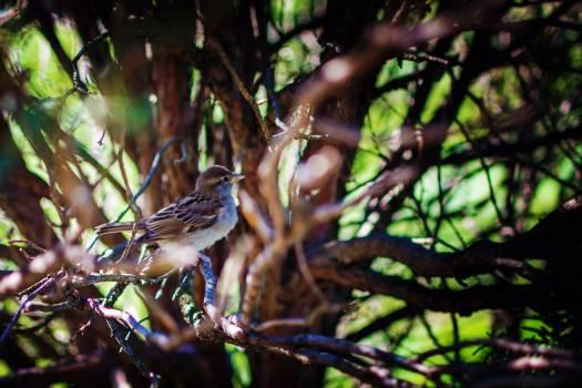 Finch Brambling Bird Free Photo