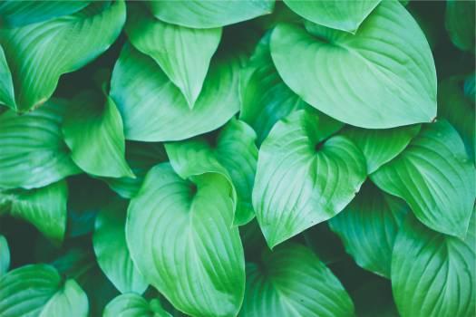 green plants leaves  Free Photo