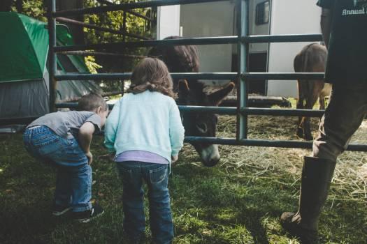 Dairy Farm Dog Free Photo