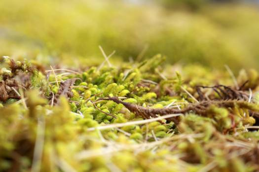 Alfalfa sprout Sprout Greens Free Photo