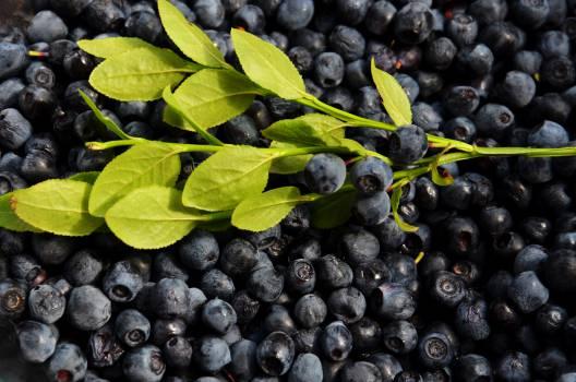 blueberries fruits food  #18431