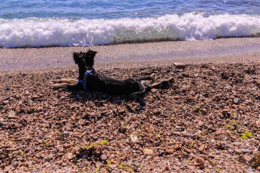 Dog Beach Terrier #184759