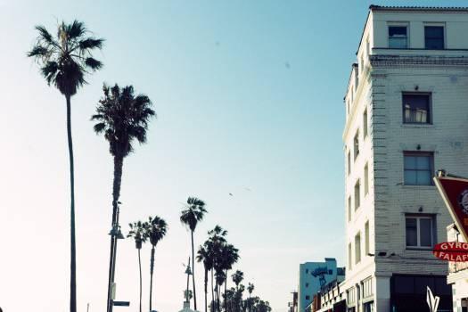 palm trees sunshine sunny  Free Photo