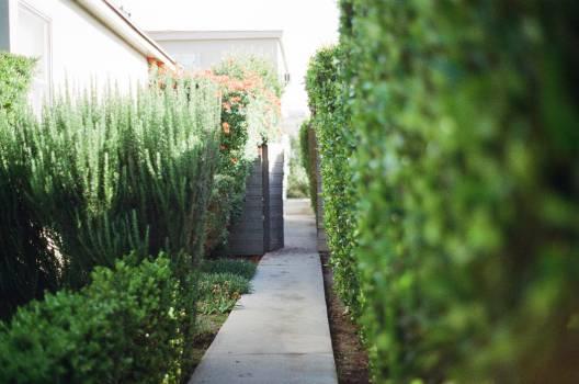 walkway stones garden  Free Photo
