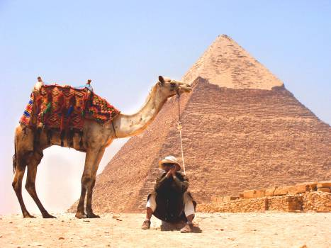 camel desert pyramid  #18491