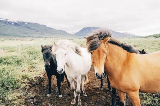 horses animals mane  #18504