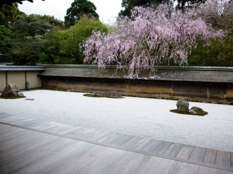 zen garden japanese  Free Photo