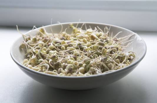 Bean sprout Sprout Greens Free Photo