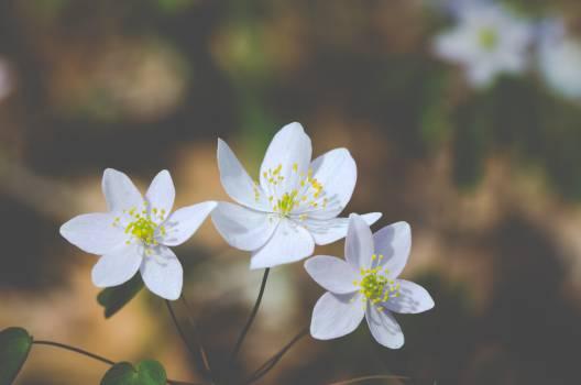 flowers wild spring  Free Photo