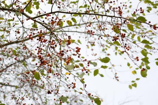 Tree Almond Branch Free Photo