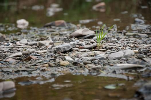 Water snake Snake Reptile Free Photo