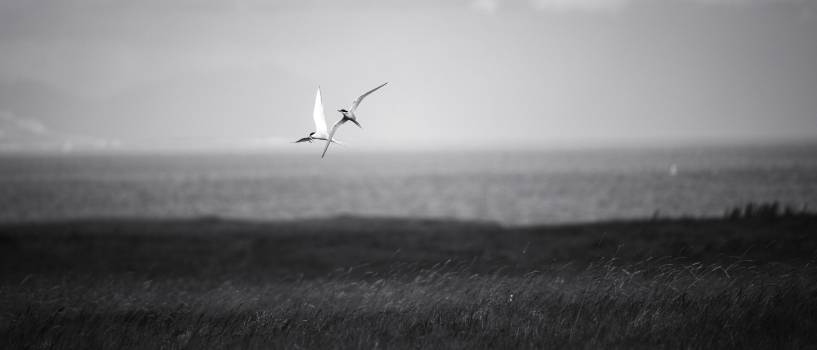 Flying Sky Gull Free Photo