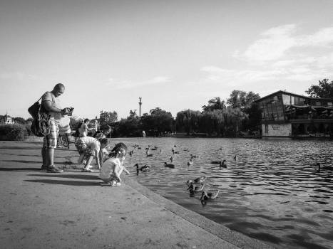 kids children ducks  Free Photo