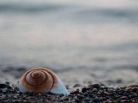 snail shell rocks  Free Photo