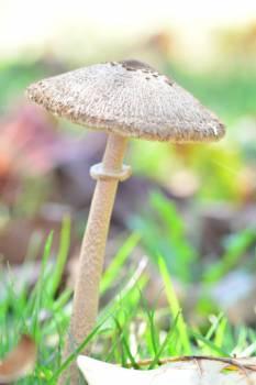 Mushroom Vegetable Produce Free Photo