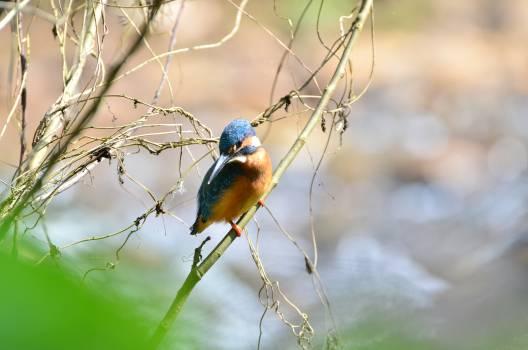 Bird Vertebrate Animal Free Photo