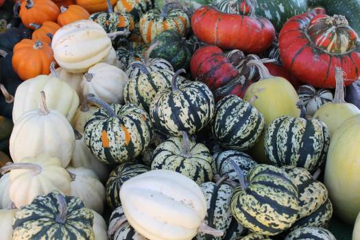 Food Vegetable Healthy Free Photo