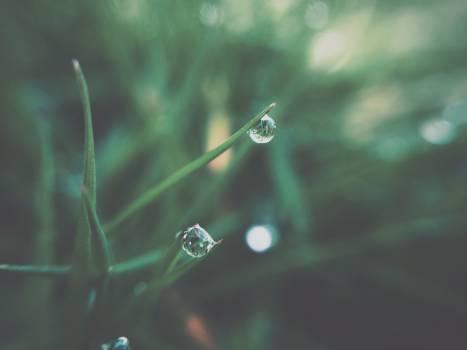 dew grass plants  Free Photo