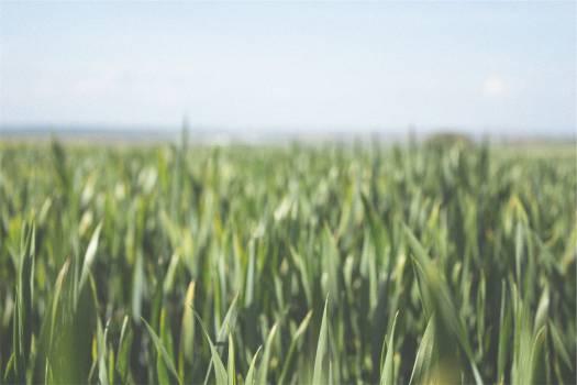 farm fields crops  Free Photo