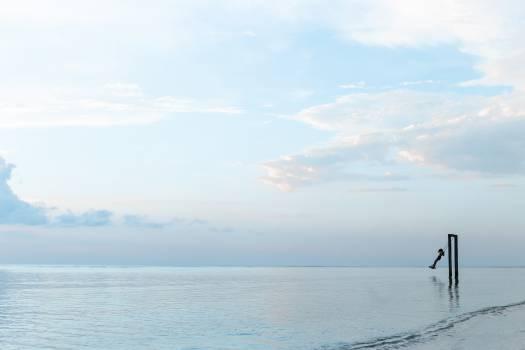 swing ocean sea  #18780