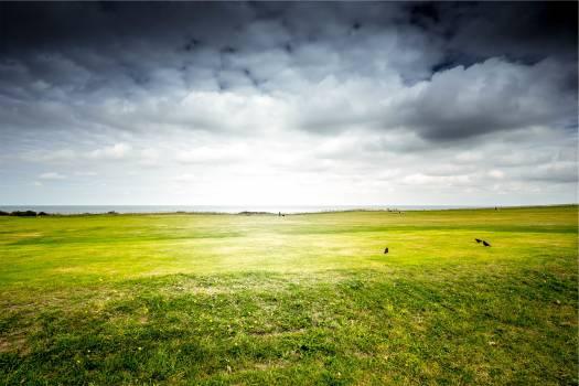 green grass field  Free Photo