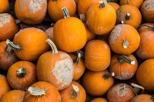 Pumpkin Squash Vegetable #188575