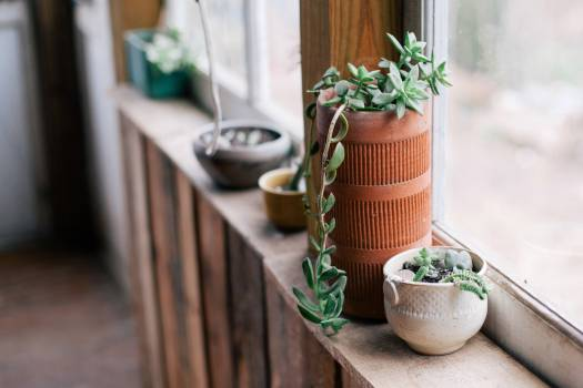 plants pots window  Free Photo
