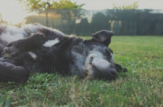 Dog Calf Farm Free Photo