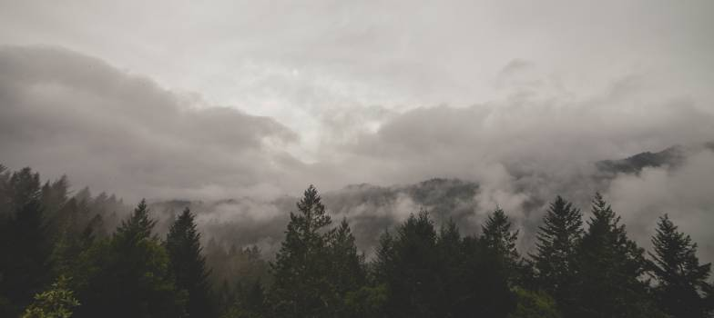 trees fog clouds  #18954