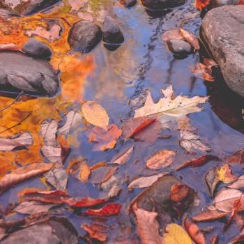 Paint Design Color Free Photo