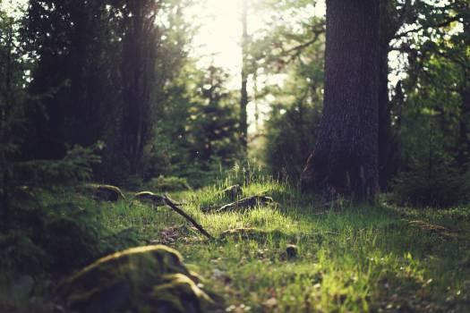 green trees grass  Free Photo