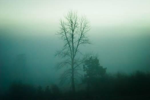 trees nature fog  #18978