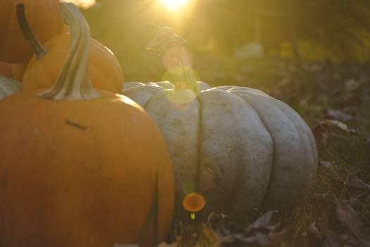 Pumpkin Bulb Squash Free Photo