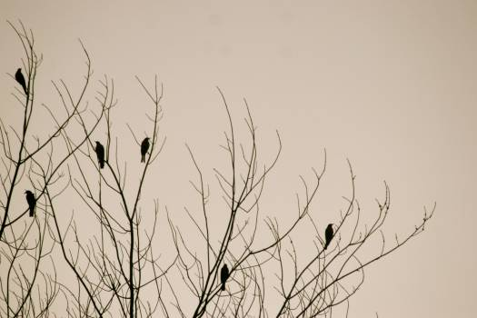 birds tree nature  #19031