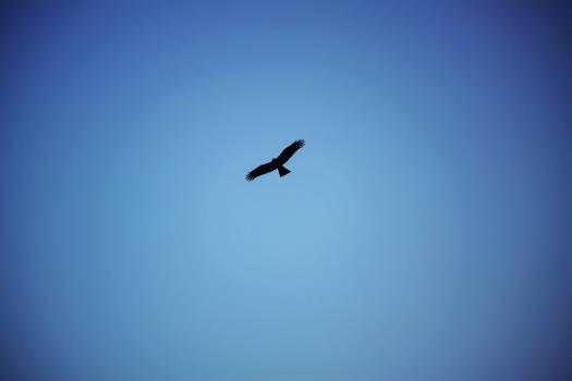 Sky Jet Flying Free Photo
