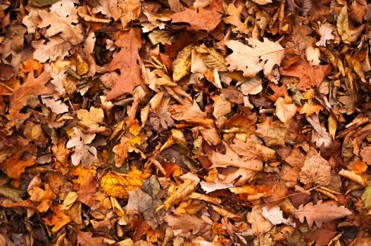 leaves fall autumn  #19069
