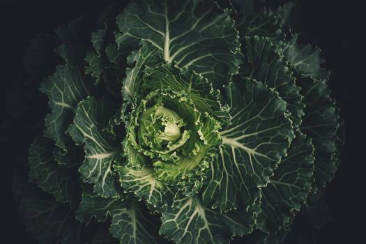 Cabbage Herb Vascular plant Free Photo
