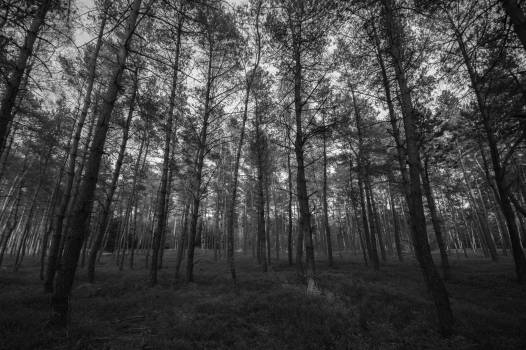 trees forest woods  Free Photo
