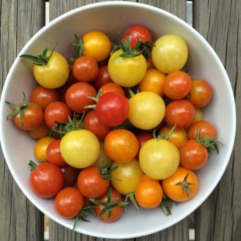 Tomato Vegetable Food Free Photo
