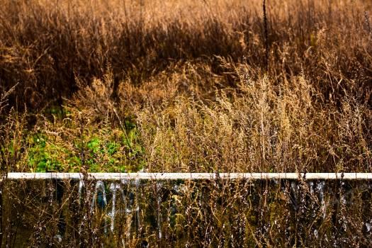 Fence Hay Landscape Free Photo